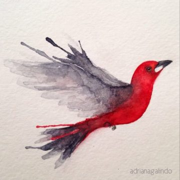 Tiê-sangue, aquarela, 2014. Sold