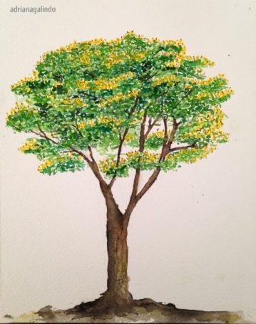 19 Sibipiruna, árvore/tree 19, aquarela / watercolor, 21 x 15 cm. Sold