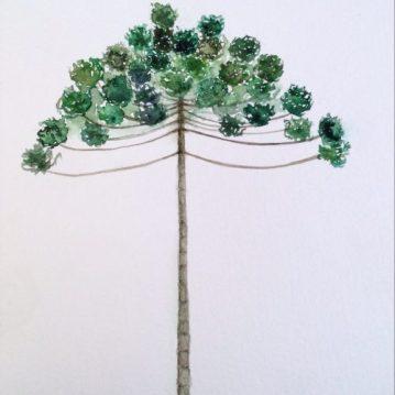 6 Araucaria, Brazilian Araucaria, tree 6, 21 x 15cm. Sold