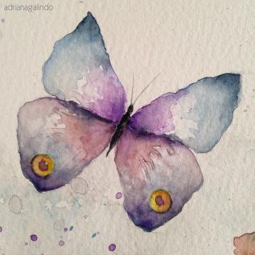 Detail Butterflies