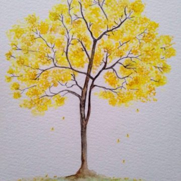11 Ipê-amarelo, brazilian tree, n.11, 21 x 15cm. Sold All rights reserved
