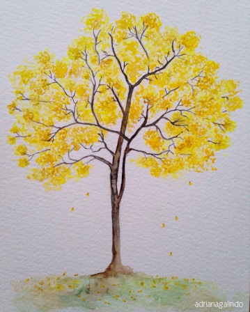 Ipê-amarelo, brazilian tree, n.11, 21 x 15cm. Sold