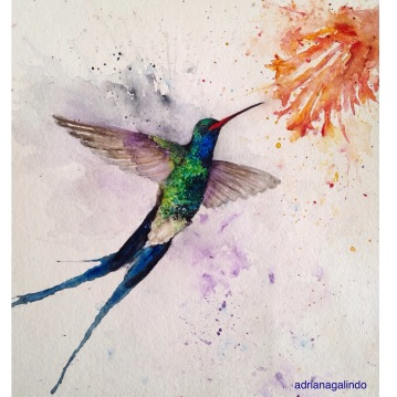 Beija-flor/Hummingbird, aquarela, watercolor , 30,5x22,9 cm. vendido/sold