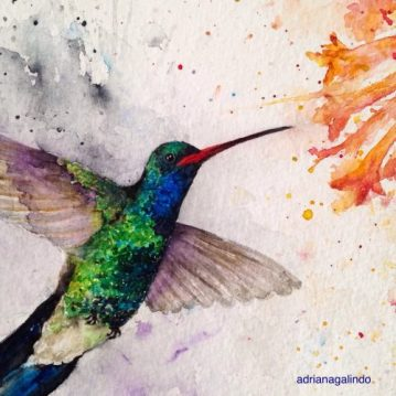 Detail, Beija-flor/Hummingbird, aquarela, watercolor , 30,5x22,9 cm. vendido/sold