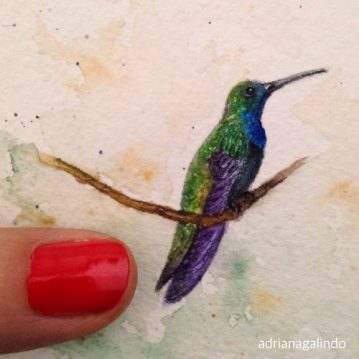 Miniatura Beija-flor/Hummingbird, aquarela, watercolor. Vendido/sold