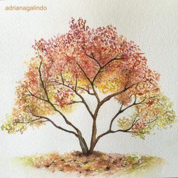 21 Caquizeiro/Persimmon tree, n.21, aquarela, watercolor , 21 x 30 cm. SOLD