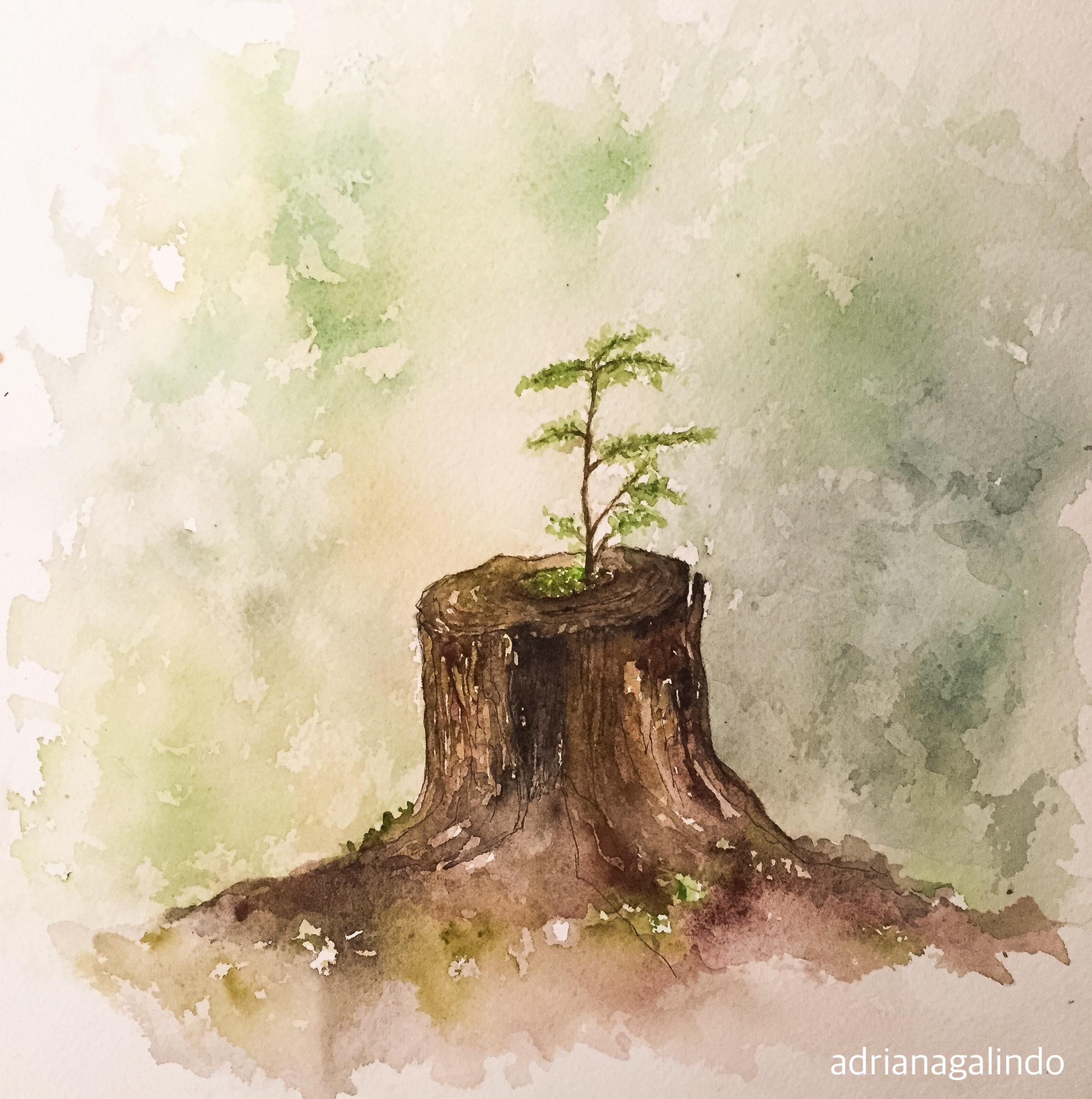 Resultado de imagem para árvore aquarela