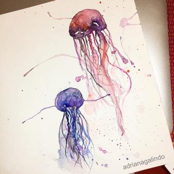 Jelly fish, 21 x 16 cm. Available / disponível
