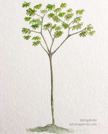 34 Embaúba, árvore 34/ brazilian tree, n.34, 15x 21 cm, Available/disponível