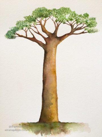 37 Baobá, arvore 37 / Baobab, tree 37 - available, / disponível