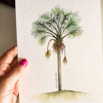 38 Buriti - (mauritia flexuosa), arvore 38 / Palm tree, n. 38 - available, / disponível