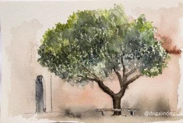 Árvore 41 - Monastère Saint Michel du Var ..Tree 41 - projeto continua - AVAILABLE