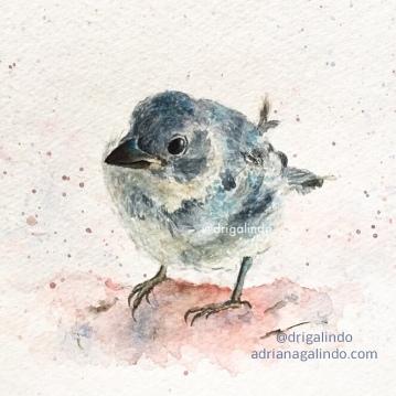 sanhaço, bird