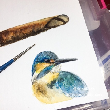bird , passaro